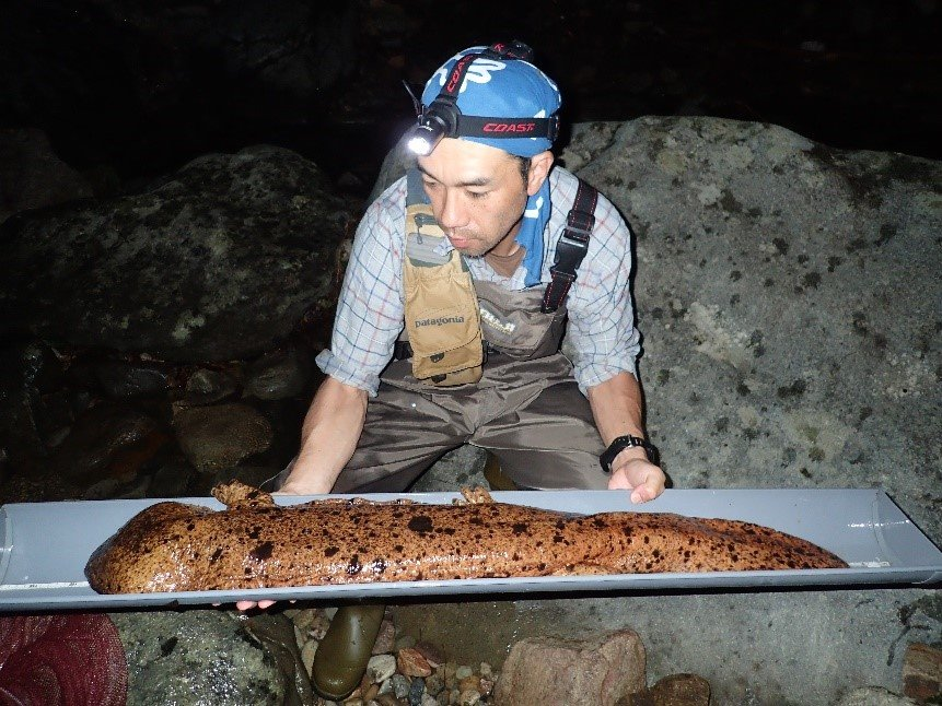 Dr. Takahashi with a giant Salamander